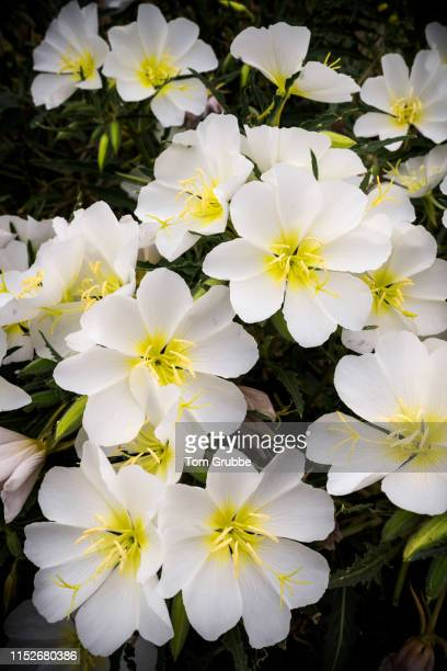 flower power - tom grubbe stock pictures, royalty-free photos & images