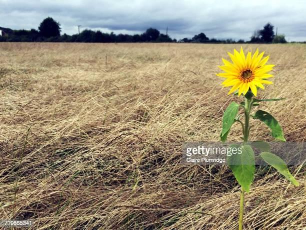 flower power - ウェスト・バークシャー ストックフォトと画像