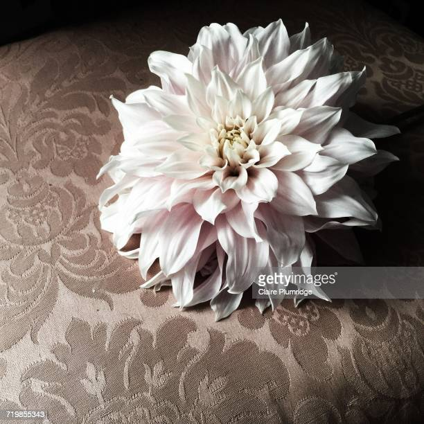 flower power - claire plumridge stock pictures, royalty-free photos & images