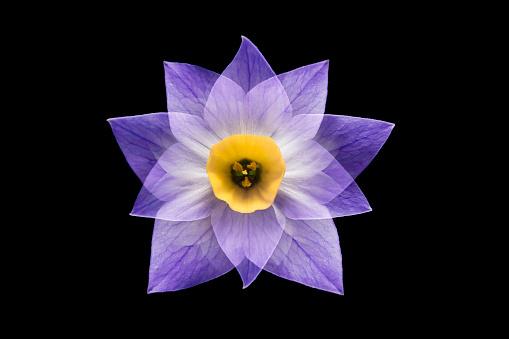 Flower Recombination - gettyimageskorea