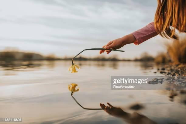 bloem reflectie op water - weerkaatsing stockfoto's en -beelden