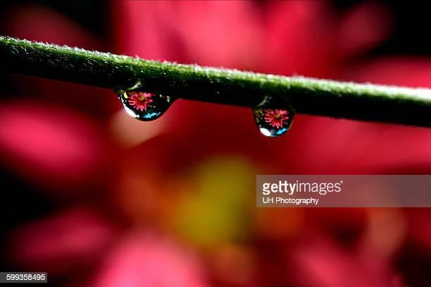 flower reflection - イスラマバード ストックフォトと画像