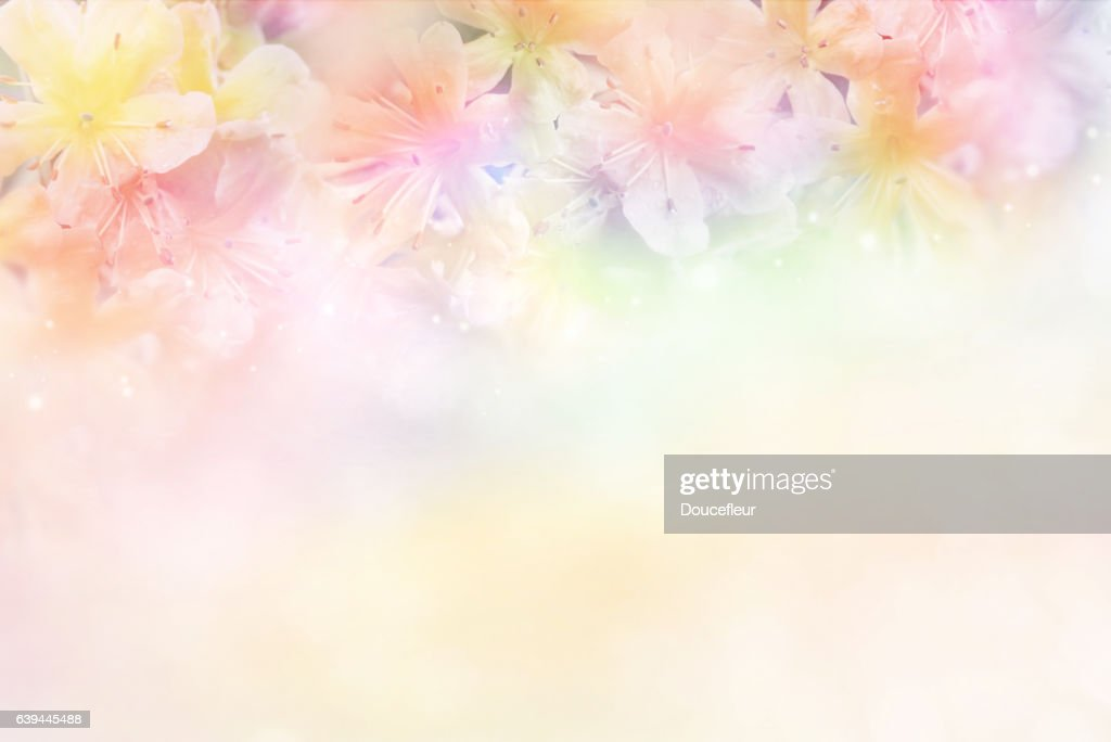 free soft pink floral background images pictures and