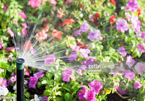 flower sprinkler action - sprinkler system stock pictures, royalty-free photos & images
