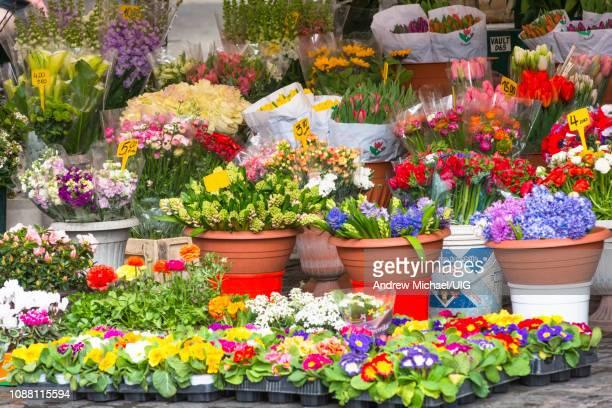 Flower stall at Campo de Fiori Market, Rome, Lazio, Italy.