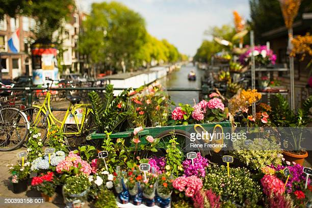 flower stall with view down princengrecht canal - amsterdam stock pictures, royalty-free photos & images