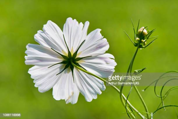 flower structure, morphology - arthur foto e immagini stock