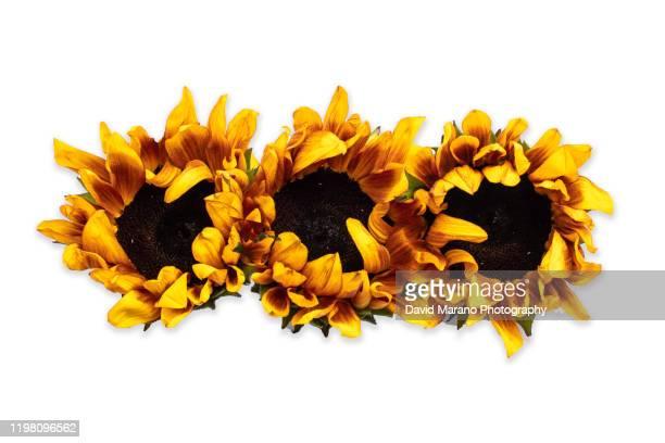 flower studio - david ramos fotografías e imágenes de stock