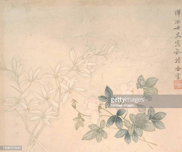 Flower Study, 17th century. Artist Yun Bing.