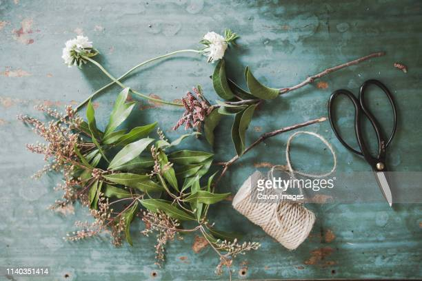 flower supplies - mountain laurel stock pictures, royalty-free photos & images