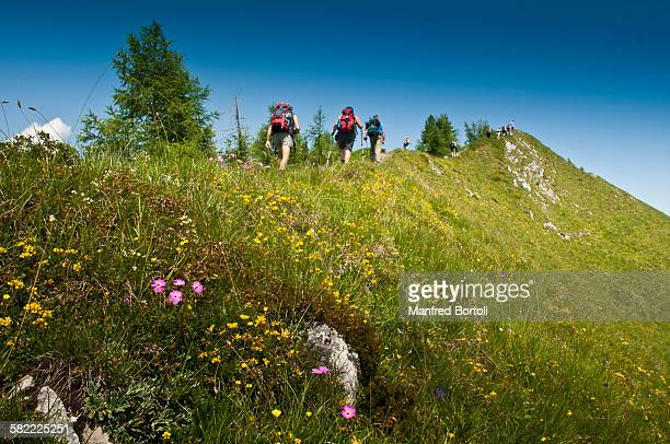Flower trail on top of the mountain