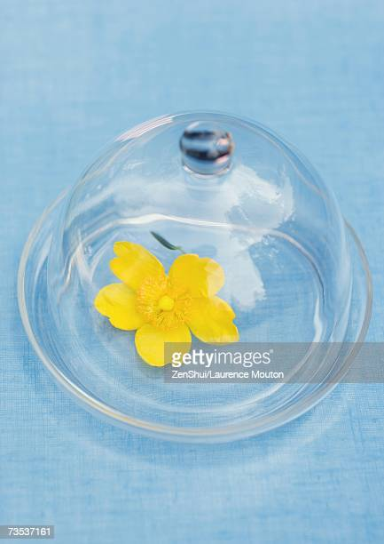 Flower under glass dome