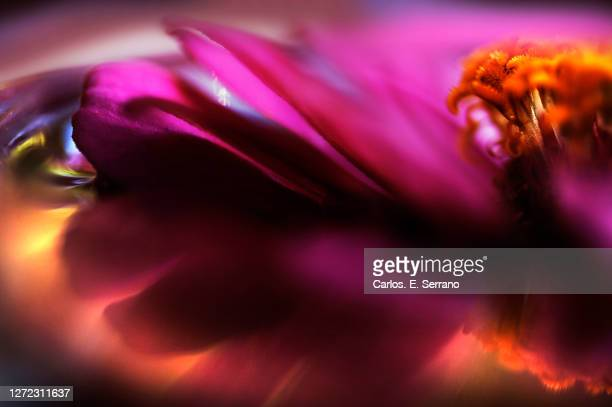 flower water floating - yonkers stock pictures, royalty-free photos & images