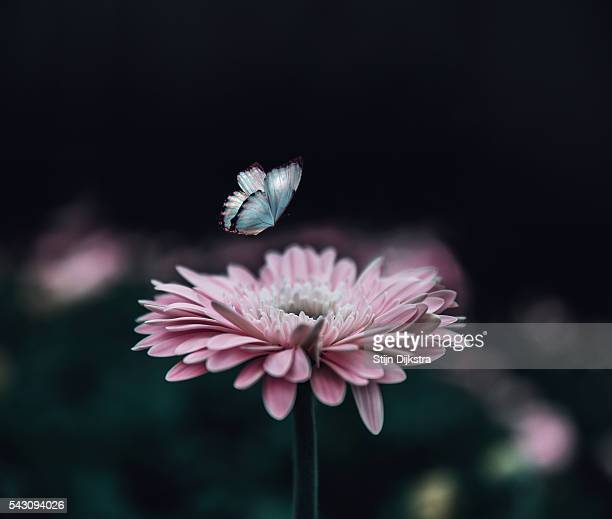 Flower with butterly