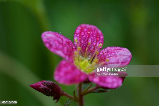 Flower with Dew Droplets