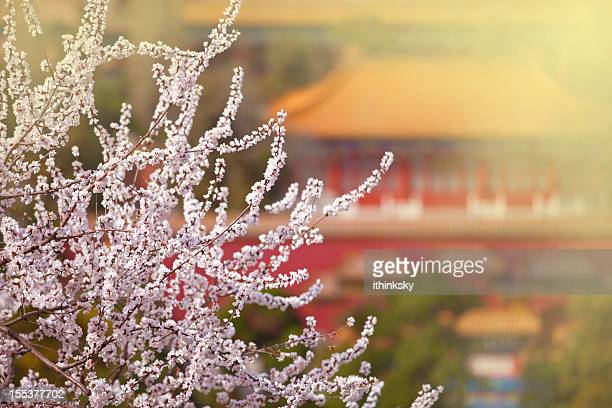 Flower with Forbidden City in Spring