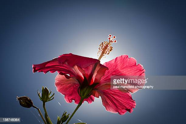 Flower with sun halo
