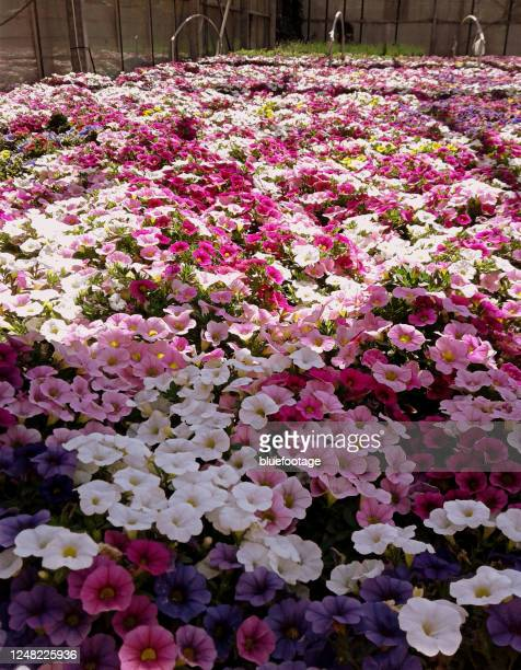 flowerbed greenhouse - bluefootage stock pictures, royalty-free photos & images