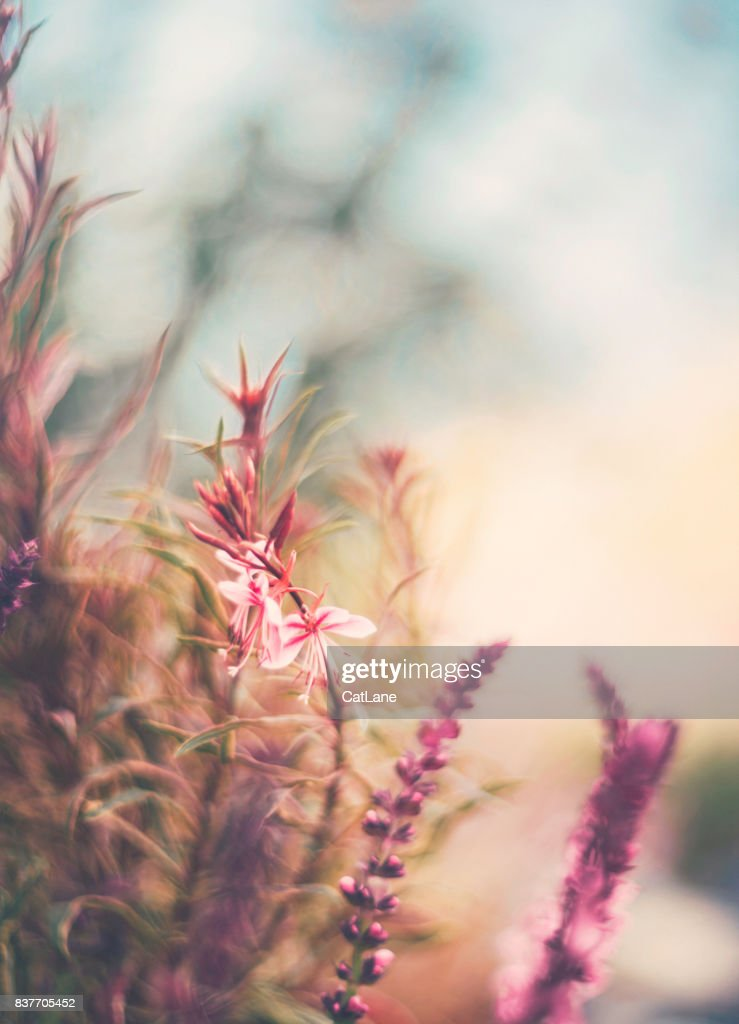 Flowerbed in natural sunlight. Flower Immersion : Stock Photo