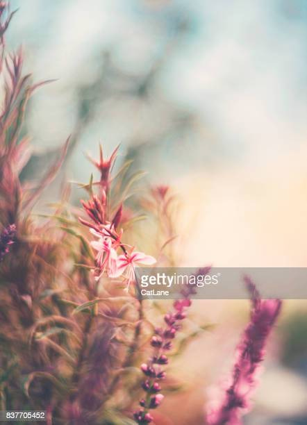 flowerbed in natural sunlight. flower immersion - peach flower stock pictures, royalty-free photos & images