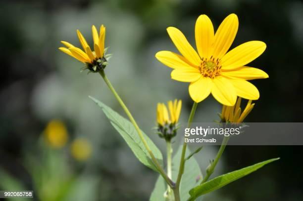 FlowerFriends
