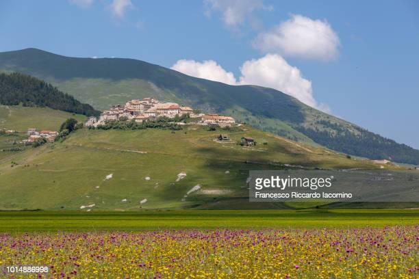 flowering at castelluccio di norcia, umbria, italy - カステッルッチョ ストックフォトと画像