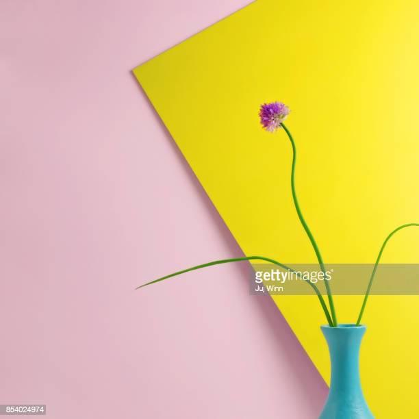 Flowering Chive Blossom