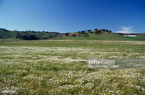 Flowering meadow in the Serra de Monchique, Algarve, Portugal.
