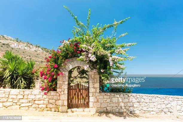 flowering on a wooden doorway, limeni, mani region, peloponnese, greece, europe - lacônia grécia - fotografias e filmes do acervo