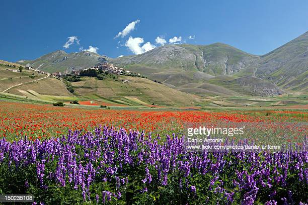 flowering - perugia stock pictures, royalty-free photos & images