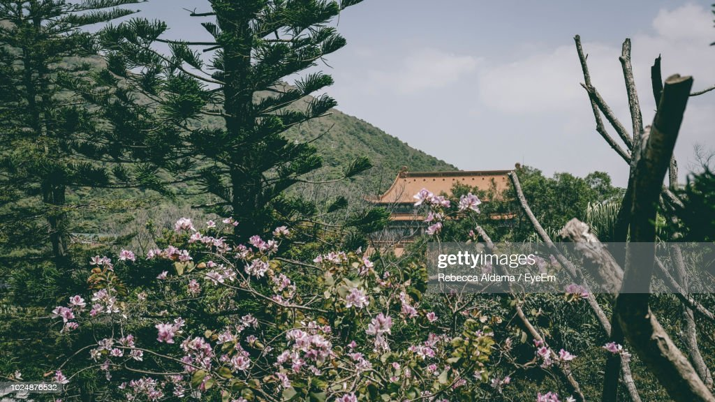 Flowering Plants And Trees By Building Against Sky : Stock Photo