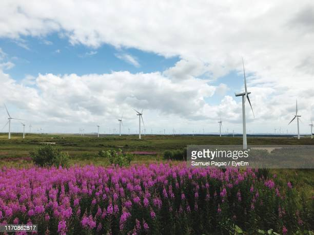 flowering plants and windmills on field against cloudy sky - flowering plant stock pictures, royalty-free photos & images