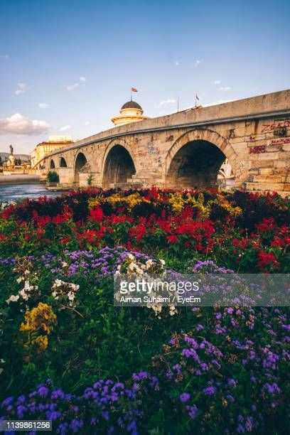 flowering plants by arch bridge against sky - skopje stock pictures, royalty-free photos & images
