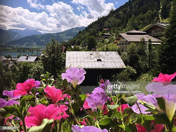 Flowering Plants Growing By Houses Against Mountains