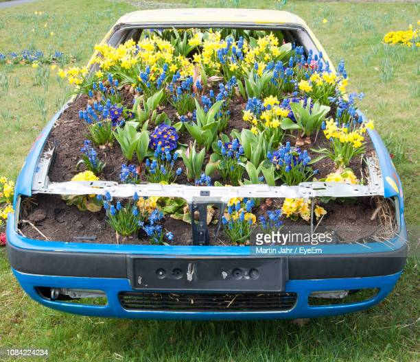 Flowering Plants Growing In Abandoned Car