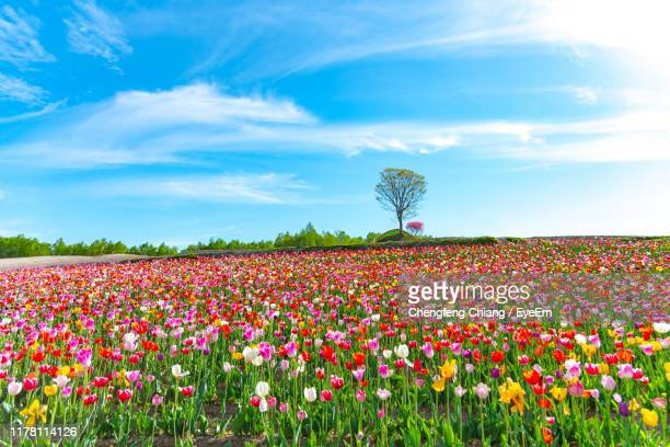flowering plants on field against sky - 花 ストックフォトと画像