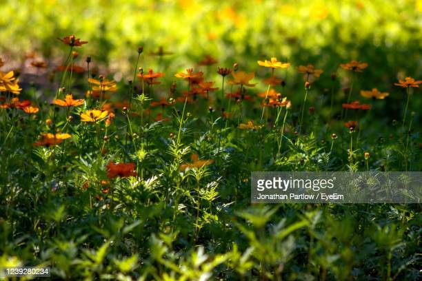 flowering plants on field - new orleans city park stock pictures, royalty-free photos & images