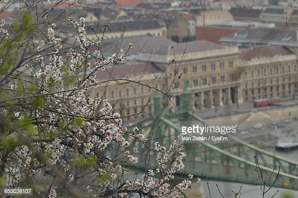 flowering tree with bridge and building in background - iván zoltán stock pictures, royalty-free photos & images