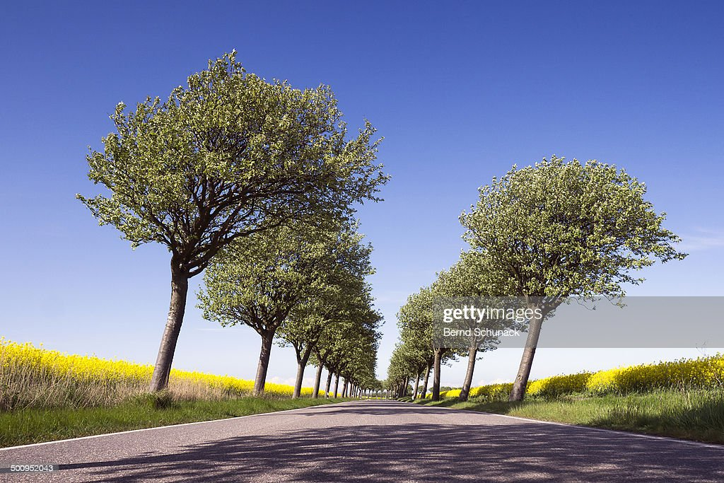Flowering Trees And Fields : Stock-Foto