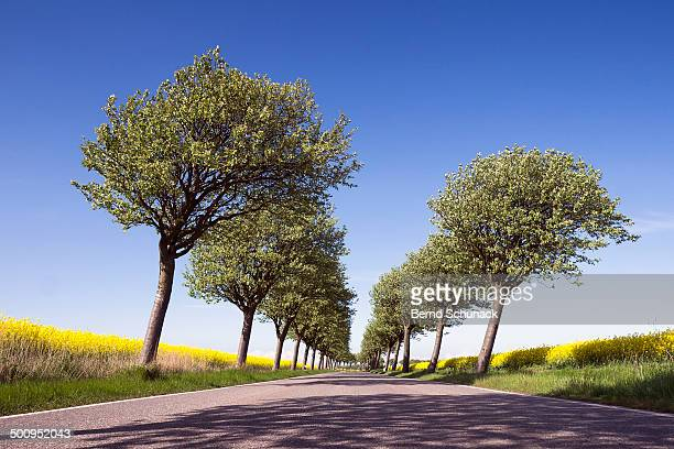 flowering trees and fields - bernd schunack stockfoto's en -beelden