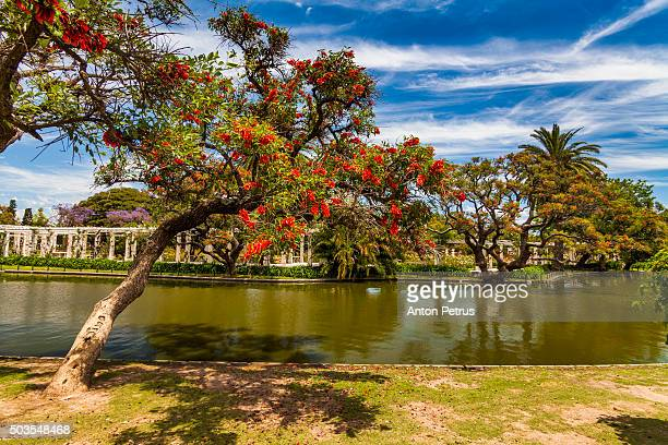 Flowering trees in the park, Buenos Aires
