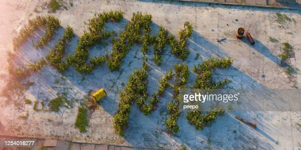 Flowering Weeds Spell 'Clean Me' In Dirty Derelict Urban Landscape