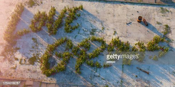 Flowering Weeds Spell 'Love Grows' In Dirty Derelict Urban Landscape