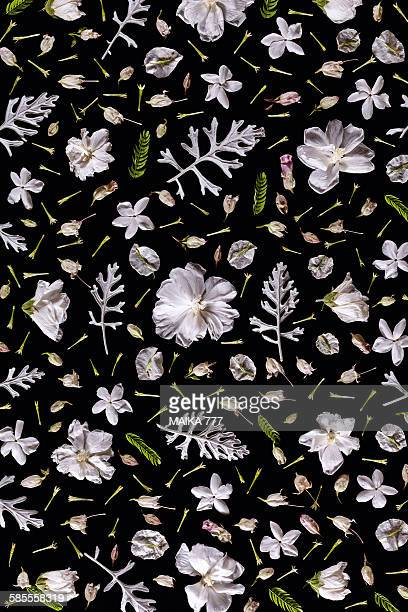 Flower&leaves, seamless pattern, black background