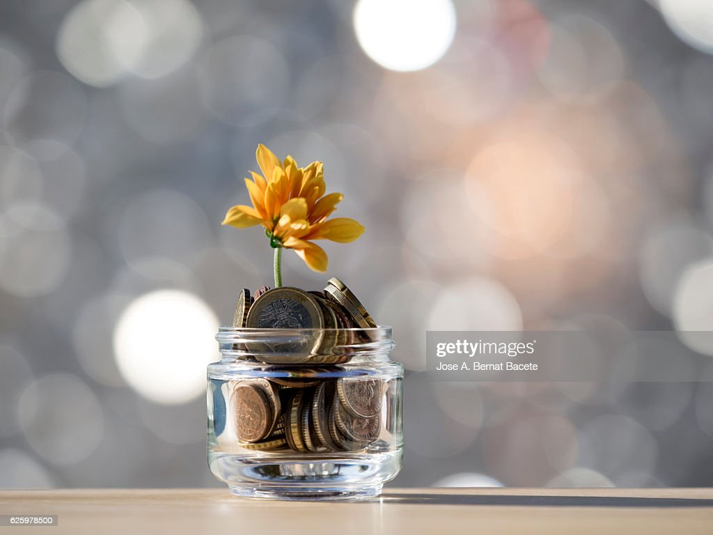 Flowerpot of crystal with a plant, growing inside a heap of coins of Euro : Stock Photo