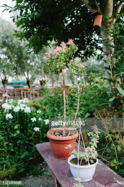 flowerpots in a garden - kamperen stock pictures, royalty-free photos & images