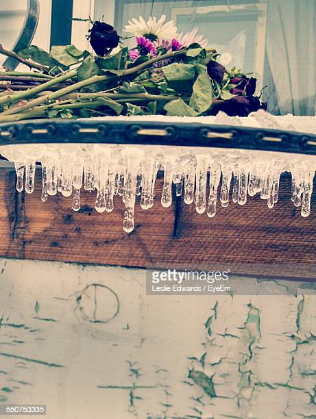 Flowers Above Icicles