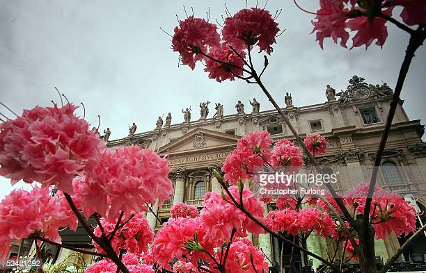 Flowers adorn St peter's Square in preparation for Easter Sunday Mass on March 26 2005 in Vatican City As Catholic pilgrims flocked to Rome Pope John...