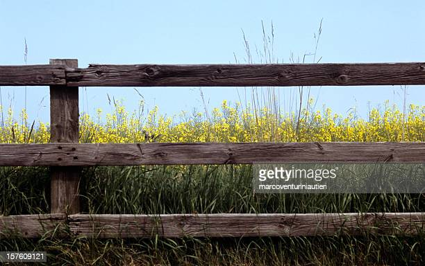 flowers after the fence - hek stockfoto's en -beelden