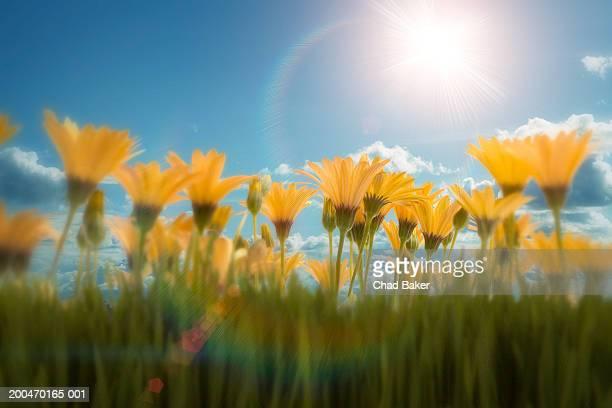 Flowers against blue sky (Digital)